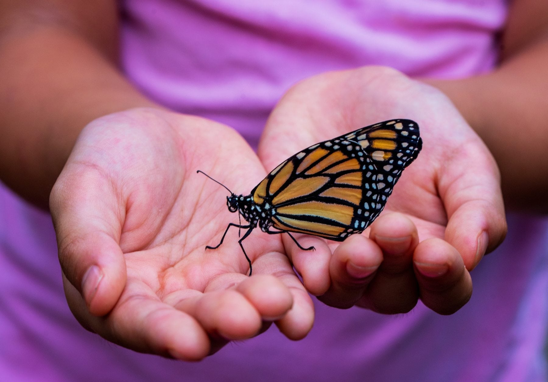 kid learning about butterflies with backyard nature center resources
